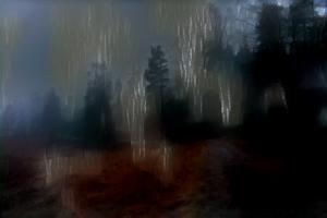 metsa_takaisin_1150